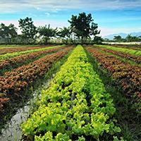کشاورزی-و-منابع-طبیعی-2